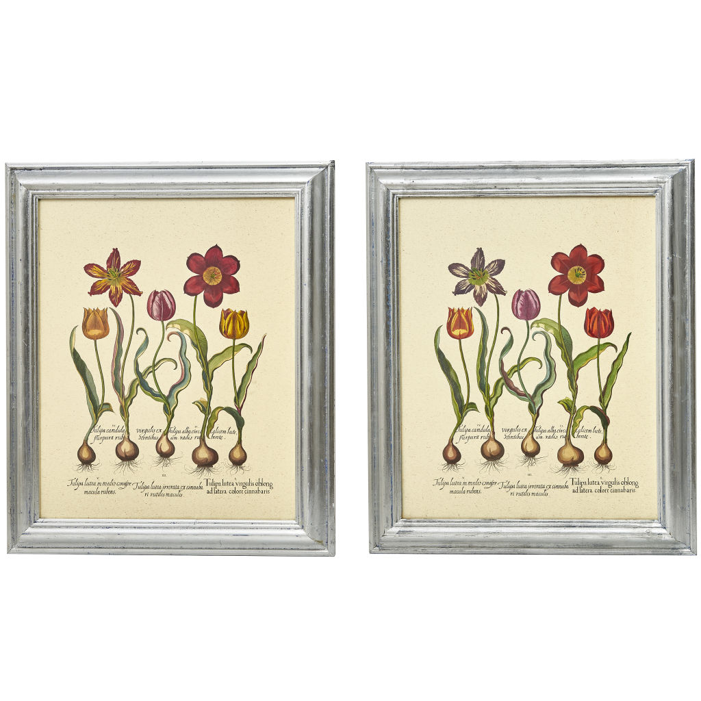 Pair Botanical Prints of Tulips