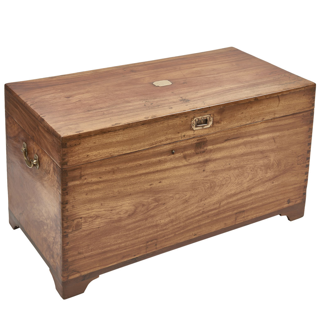 Camphor Wood Trunk