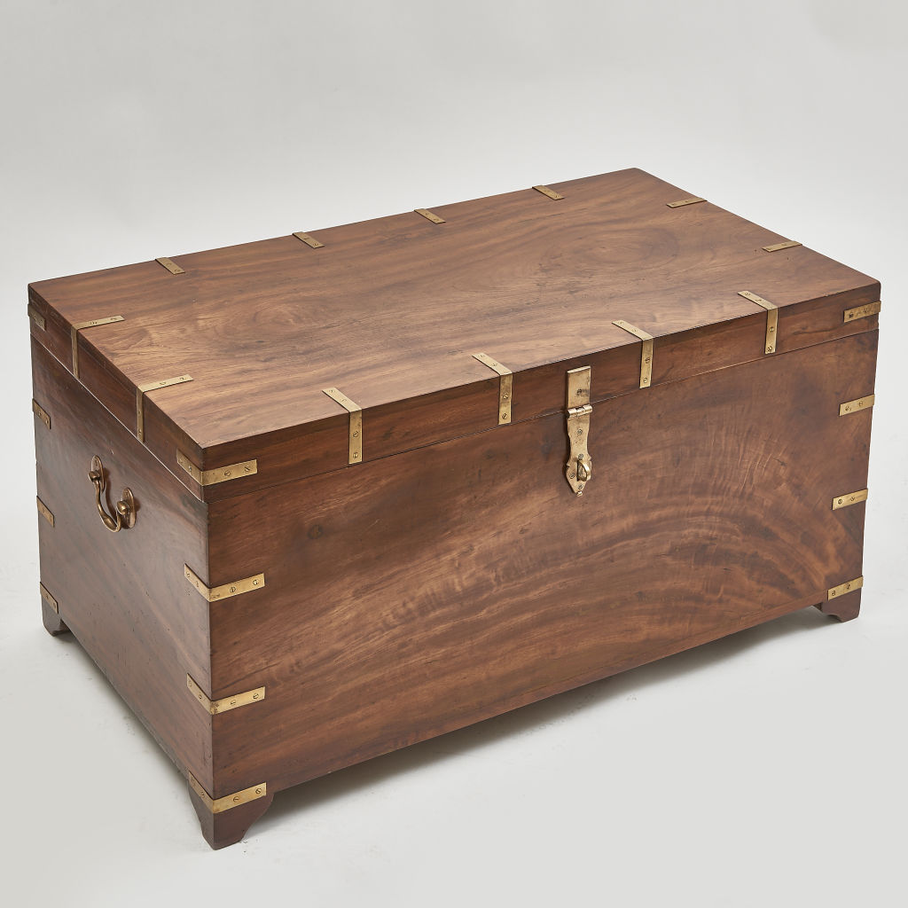 Large Camphor Wood Trunk