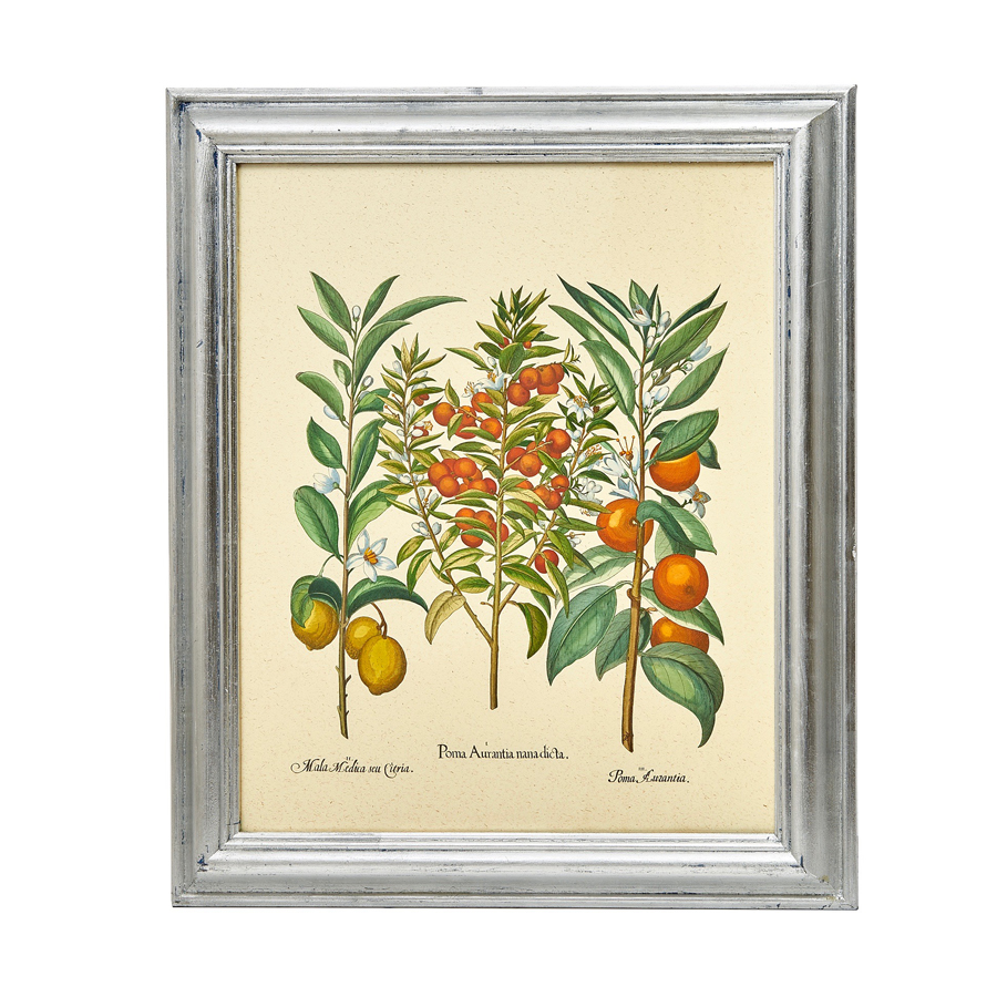 Single Botanical Print