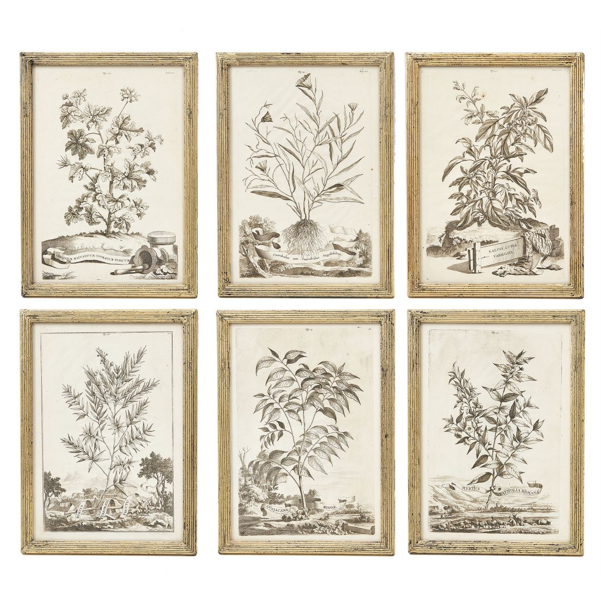Set of 6 Abraham Munting Botanical Prints