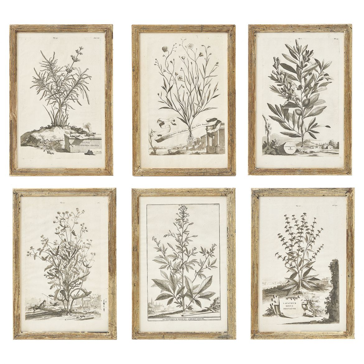 Set of Abraham Munting Botanical Prints