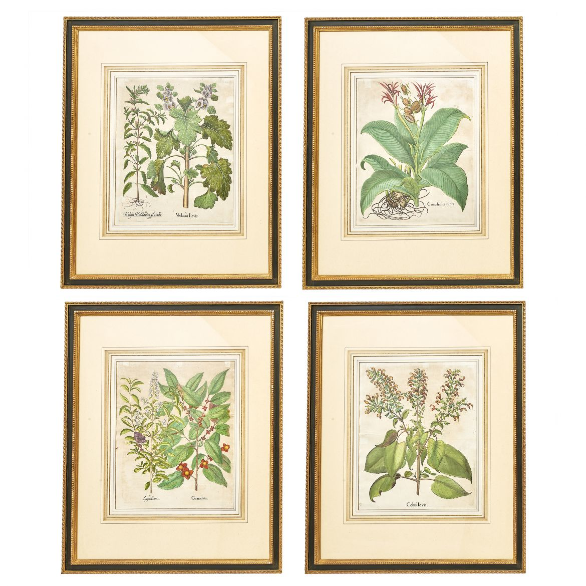 Set Botanical Prints