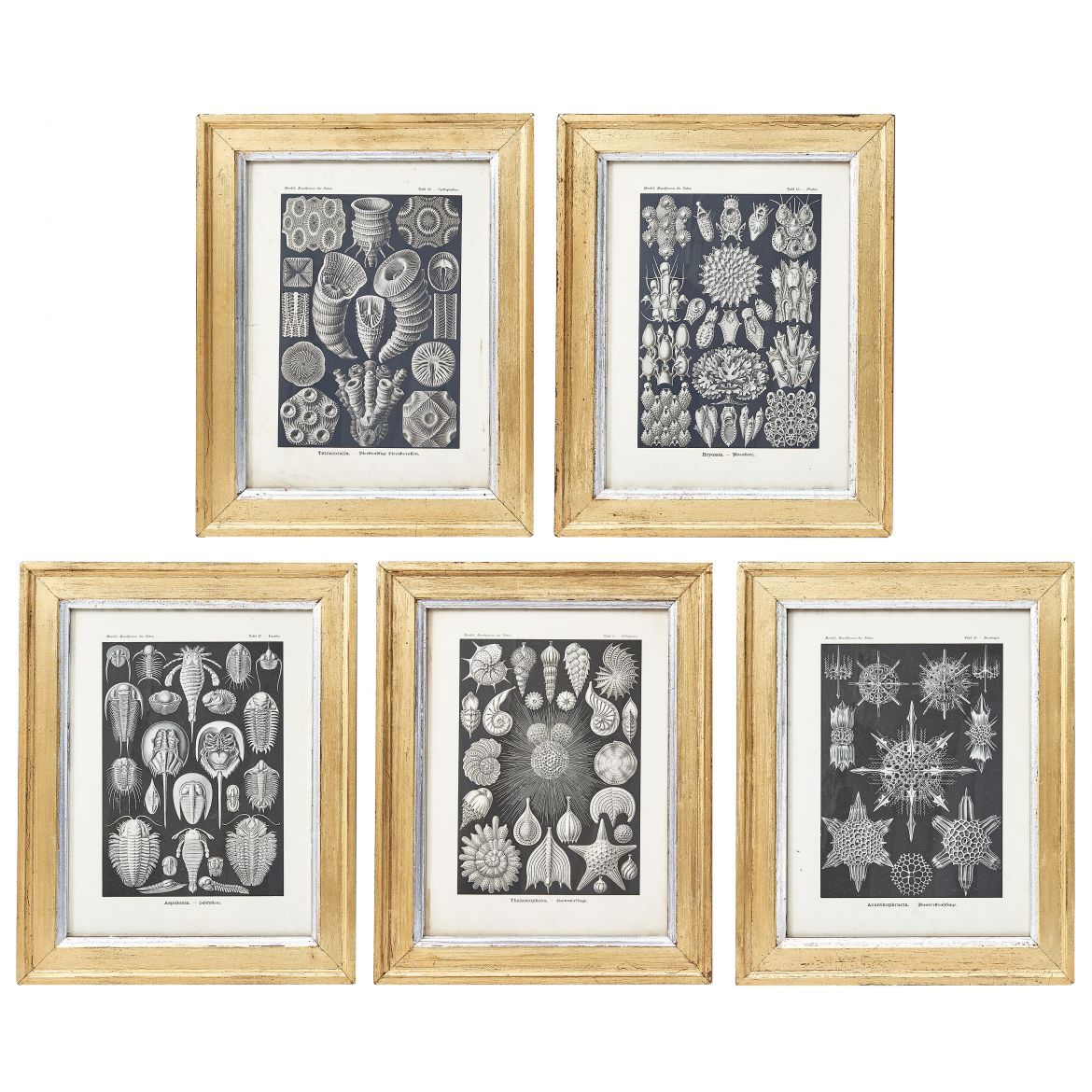 Five Ernst Haeckel Nature Prints