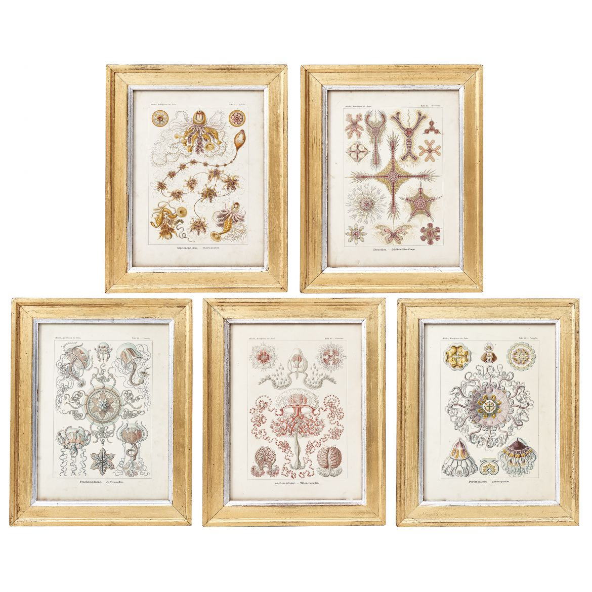 German Art Form in Nature Prints