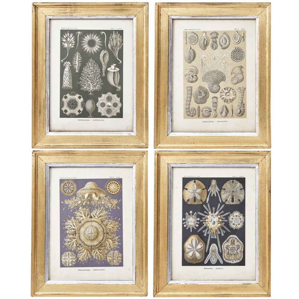 Four Ernst Haeckel Nature Prints