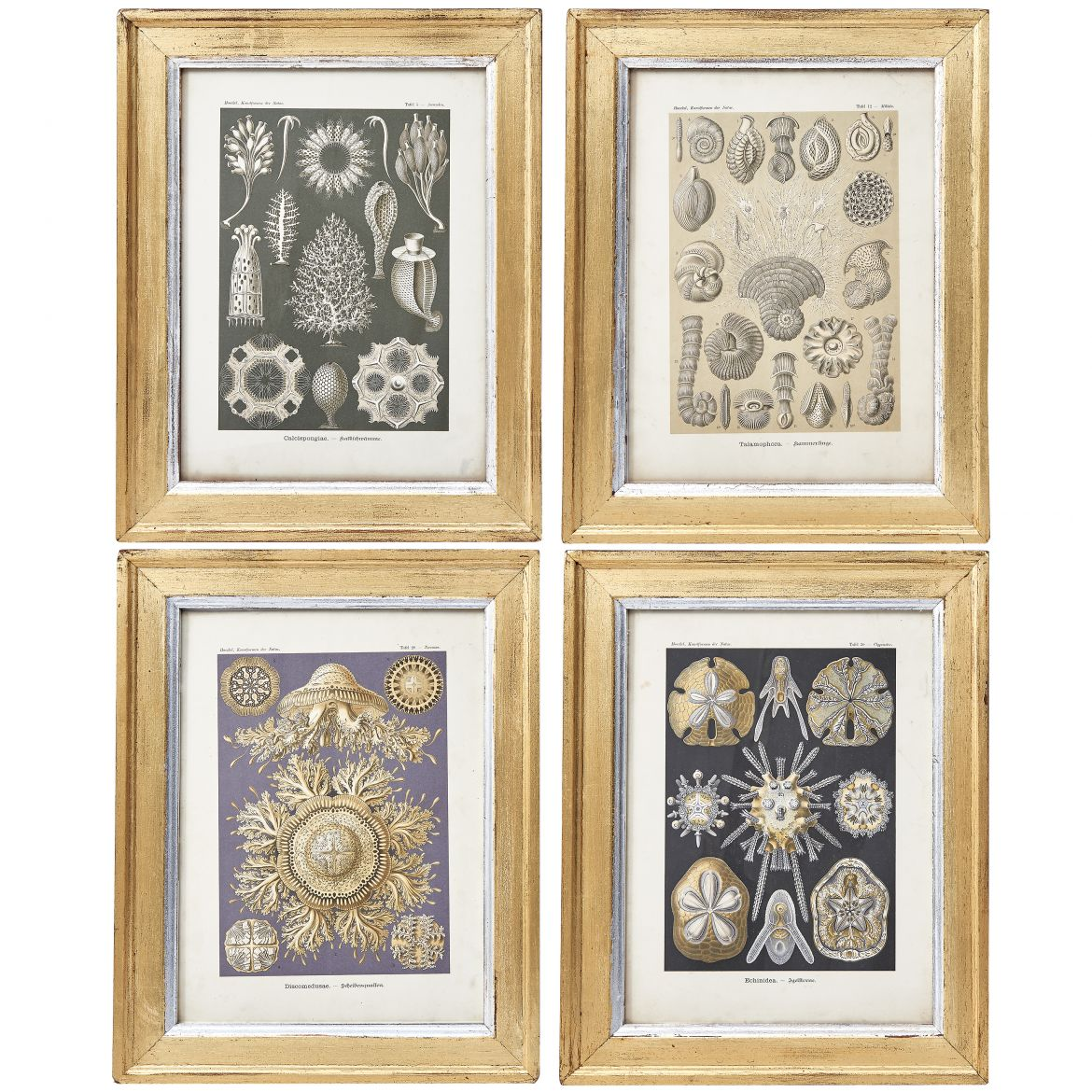Four Ernst Haeckel Prints
