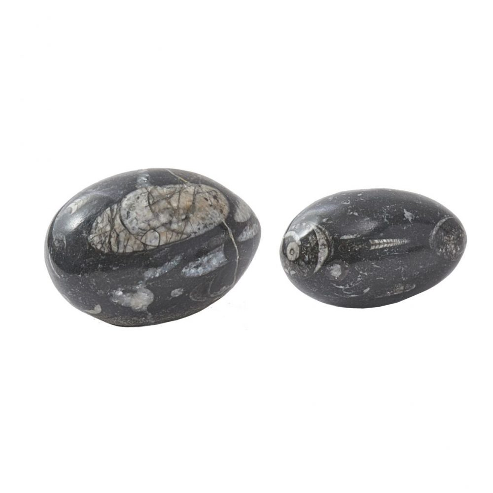Pair Fossil Black Marble Eggs