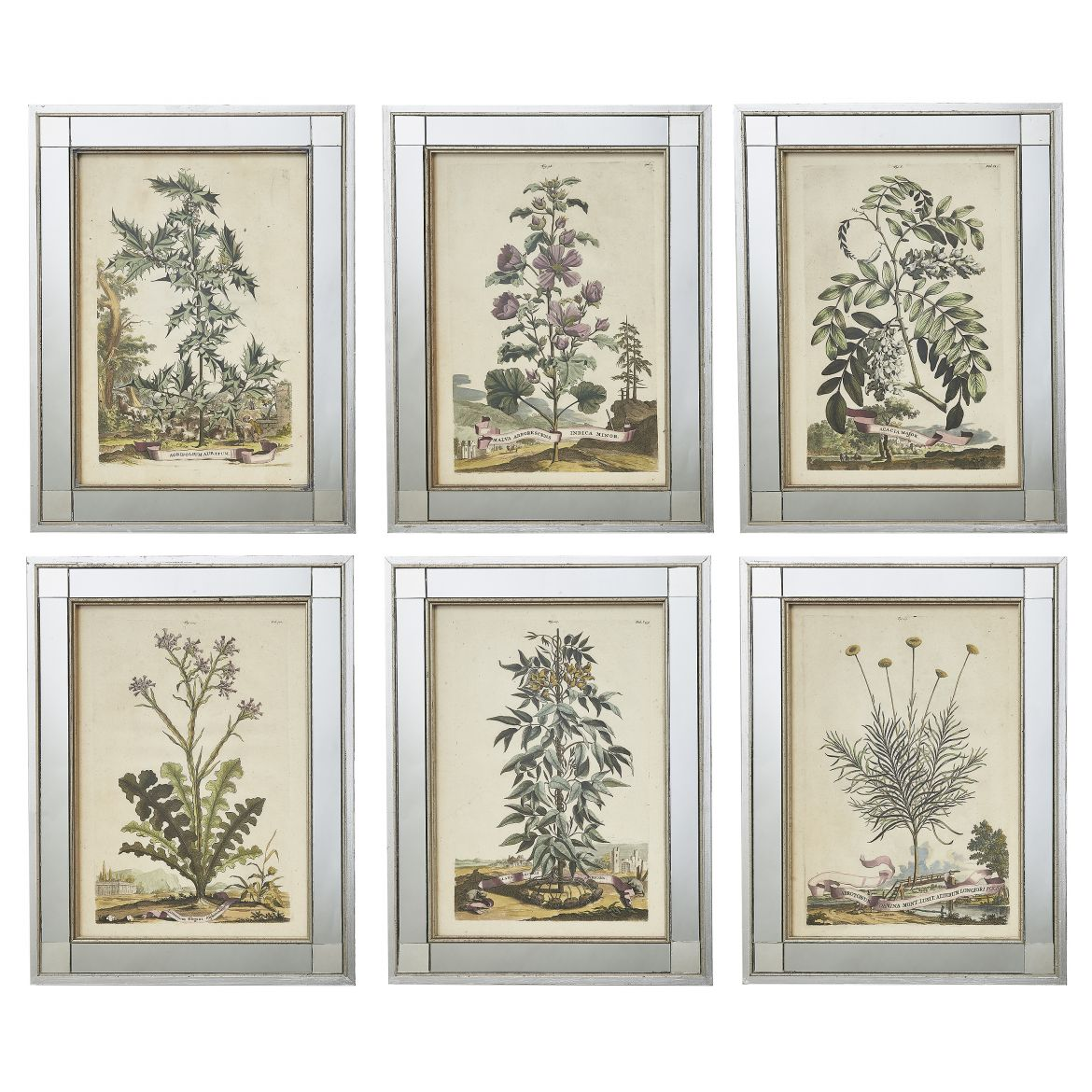 Six Hand Coloured Abraham Munting Botanical Prints